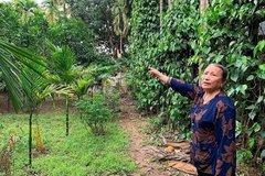 Huyện Mê Linh, Hà Nội: Cần bảo đảm lợi ích hợp pháp cho người dân